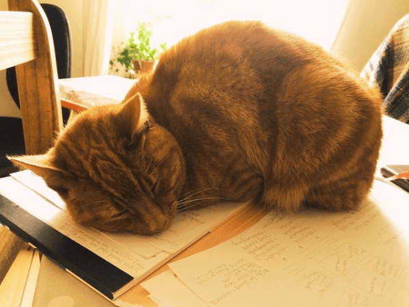 A cat is curled up and sleeping on a pile of notes